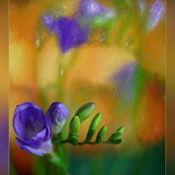 foto en geschilderde foto in één...........