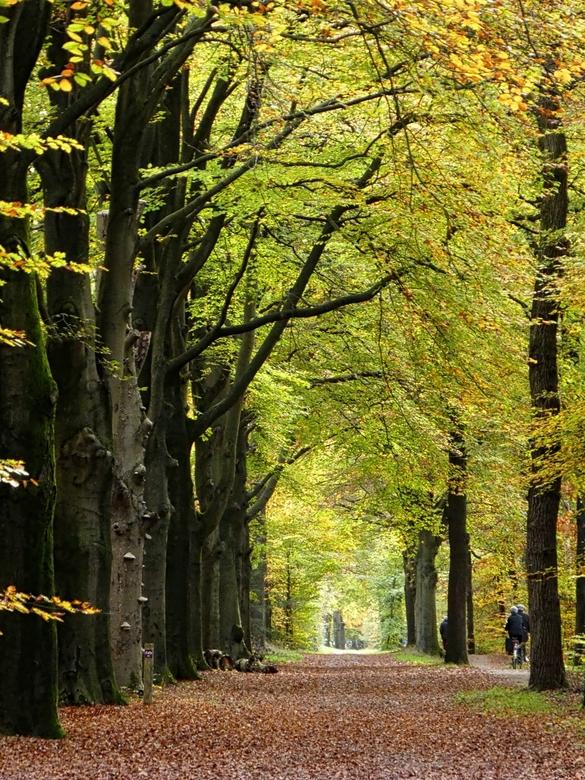 fietsen in de herfst - Fietsen onder de bomen in de herfst is een verademing voor het oog.<br /> mooie  route bij Baarn.<br /> <br /> <br />