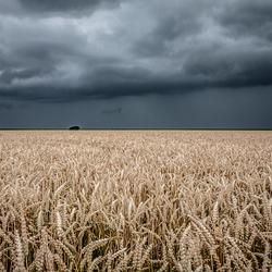 zomerstorm(klein)