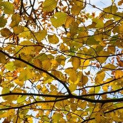 Het zonnetje door de herfstbladeren