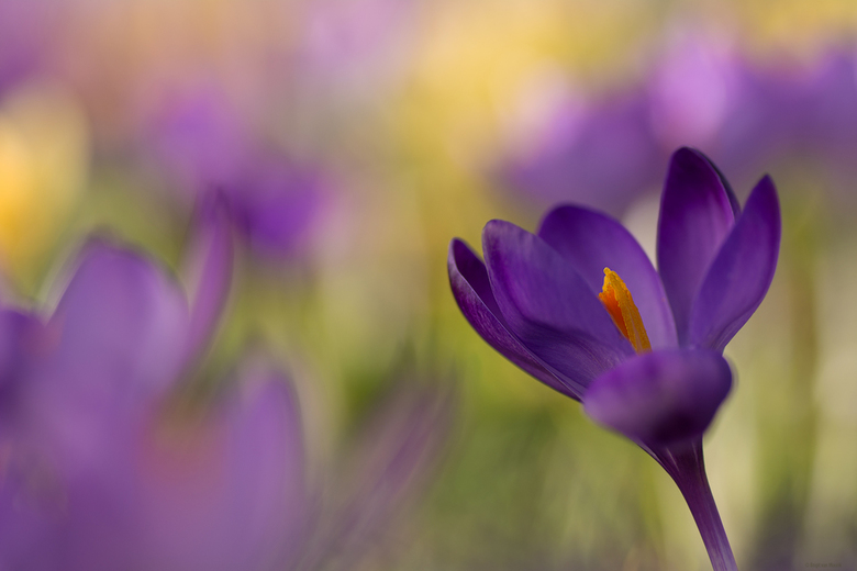 Spring colors -