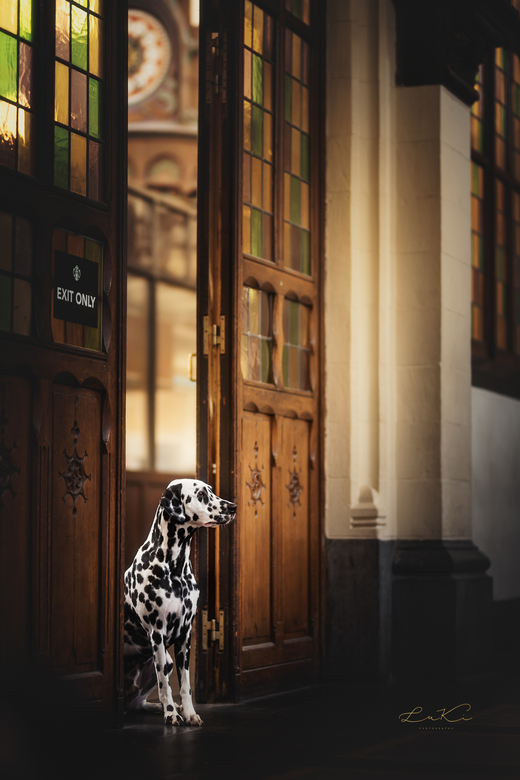 Gatekeeper - Lieve dalmatiër Seno
