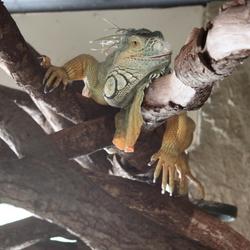 Artis - het reptielenhuis