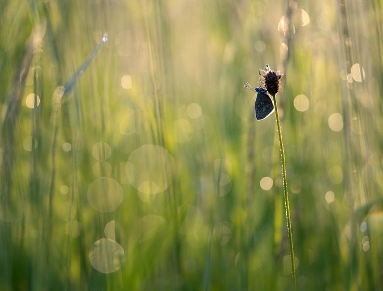 Bokeh of drops - Foto gemaakt in tegenlicht, terwijl de vegetatie nog nat was van de dauw. Dank voor jullie reactie's op 'Hanging in the gre