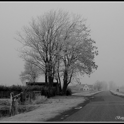 Misty-Morning.