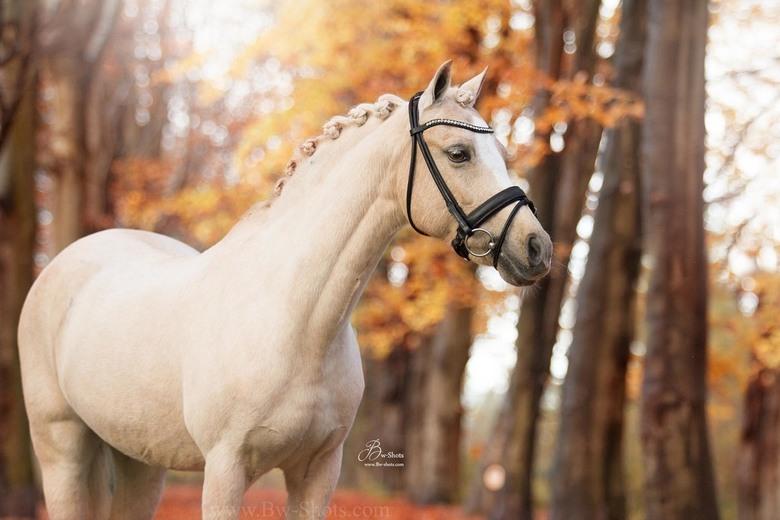 Pony Brenda