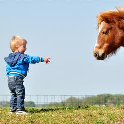 de paardenfluisteraar...