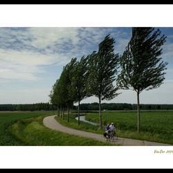 Biesbosch polder