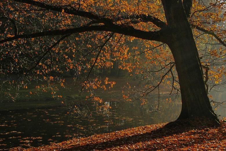 Herfst-Sonsbeekpark3  - We wandelen nog steeds in het Sonsbeekpark. Hier heb ik de belichting - met gebruikmaking van de bracketing functie- gerealise