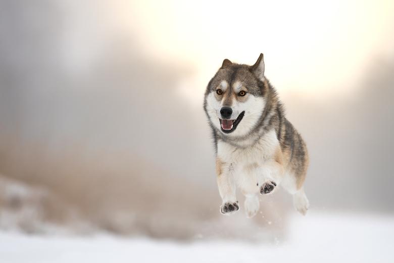 Liefde voor sneeuw -