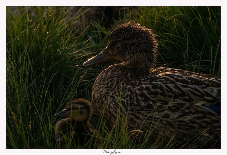 mama en kind in het avondlicht -