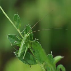 Kleine groene,...