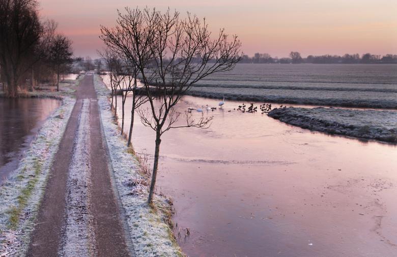 bevroren polder - het beeld van de korte winter die we tot nu toe hebben gehad in de polder.