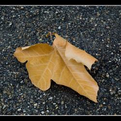 Leaf on asphalt.