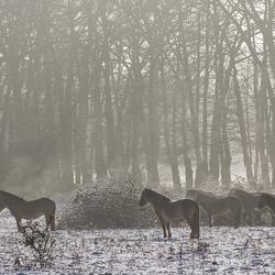 Paarden in de sneeuw.jpg