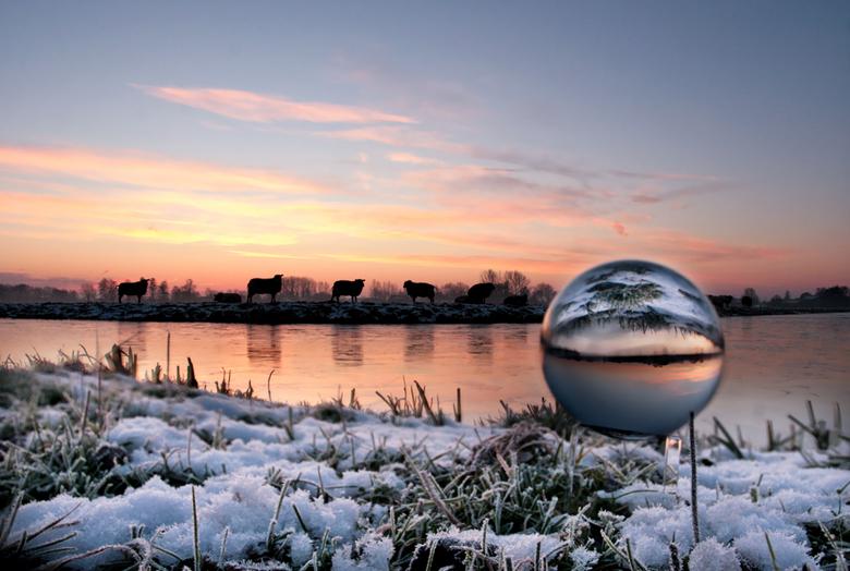 Ontwakende schapen - Ontwakende schapen in de winter, gisterochtend lijkt alweer zo lang geleden.<br /> groeten, bert