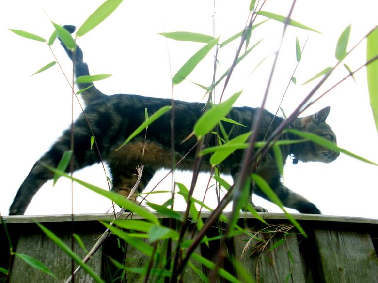 cat - kat van de buren