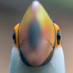 Kijk even recht in de lens . . .