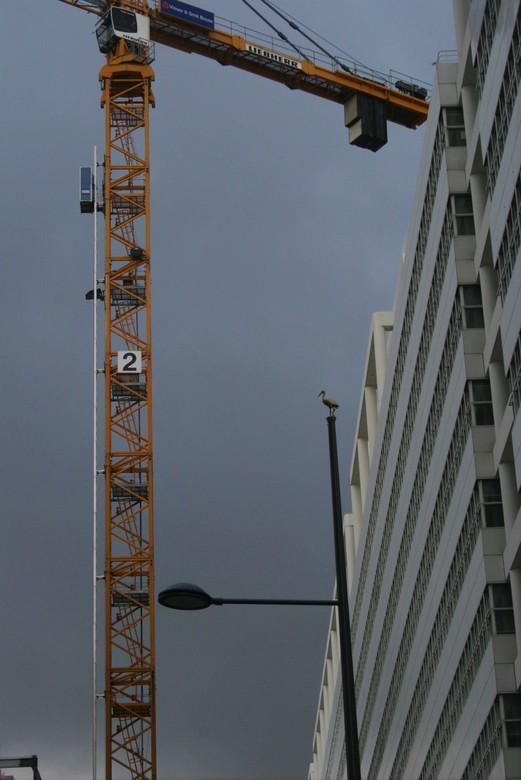 IMG_9047 Hoog in de lucht - Centrum Den Haag, heel hoog, ooievaar kan niet vliegen