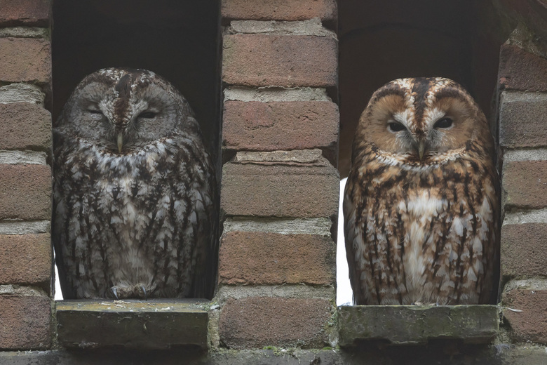 Mr & Mrs owl .