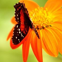 Een bezoek aan een vlindertuin