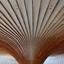 Paddenstoelenplafond