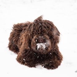 Teddy in de sneeuw