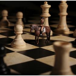 paard naar E6
