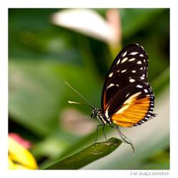 En nog een vlinder...