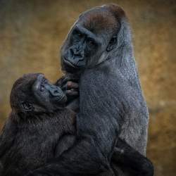 Moeder Liefde ...