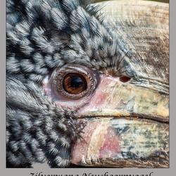 Bewerking:  zilverwang Neushoornvogel -