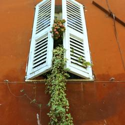 Amandola window