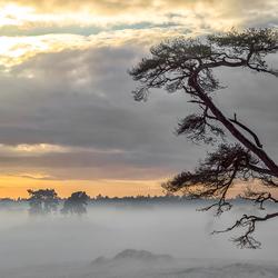 On a Dutch winter's plain