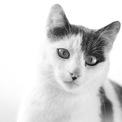 Zwart wit kat