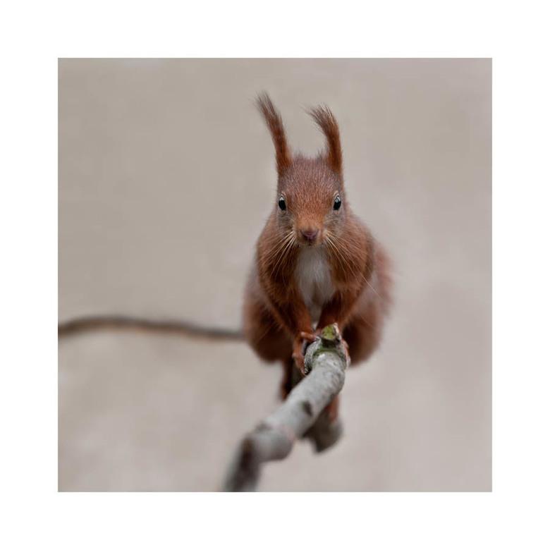 Verrassing... - Voor dit eekhorentje was het een hele verrassing dat hij mij daar ineens aan het andere eind van de tak zag staan.