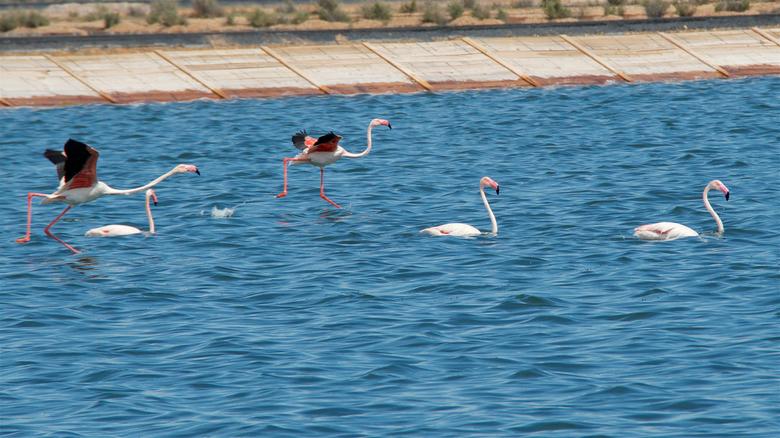 lopen over water 1 - Dag 20:<br /> <br /> We verlaten Portugal en komen in Spanje aan.<br /> Eerst nog langs een prachtig vogelgebied, waar je ook