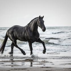 Black beauty aan zee