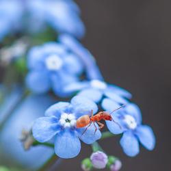 een mier aan de wandel