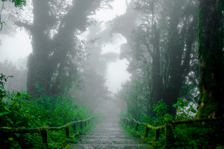 Doi Inthanon National Park - Doi Inthanon National Park, Chiang Mai, Thailand