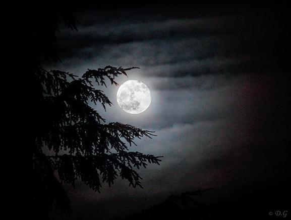 In Your Light - Volle maan op nieuwjaarsavond.<br /> <br /> Ik heb hiervoor 2 foto&#039;s gecombineerd, aangezien de contrasten hier en daar te groo