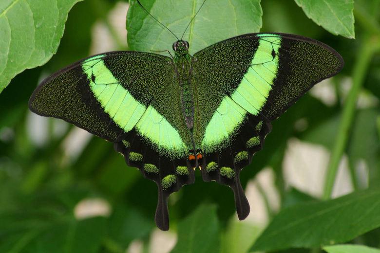 vlinder in een vlindertuin zuid frankrijk - bedankt voor het kijken<br /> <br /> Groetjes Danny
