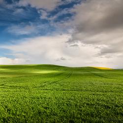 Eindeloos groen