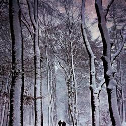 Samen door het bos