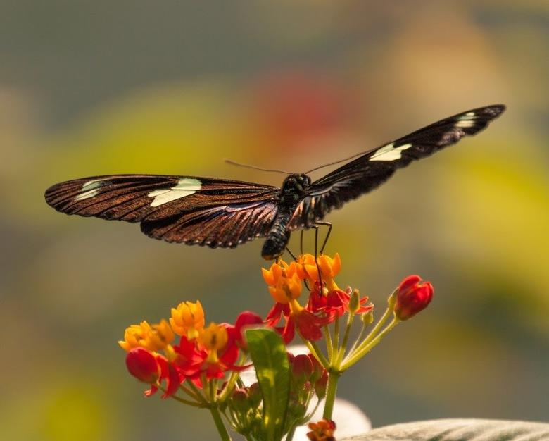 Vlinder in heel mooi licht - Klaar voor de start