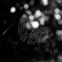 Spinnenweb bij strijklicht