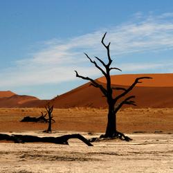Deathvlei Namibie