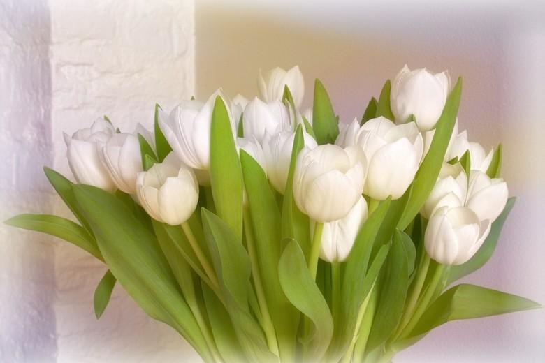 Stay at home-therapie...  - Zoveel mogelijk binnen blijven betekent ook jezelf vermaken. Een camera, bos tulpen en zonlicht door het raam helpen daarb