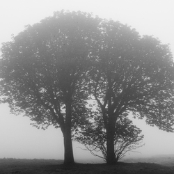 Two Trees become One