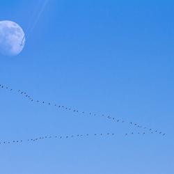 Voor en langs de maan