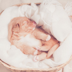 New-born puppyshoot